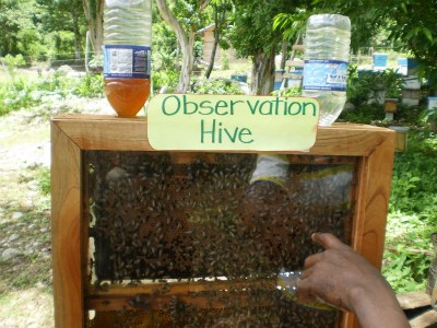 Bee Keeping - a demo hive in Beeston Spring