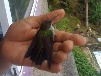 Tamika wih a Female Hummingbird