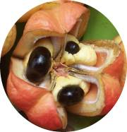 Ackee - Jamaica's National Fruit