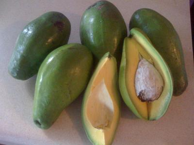 Avocados (Pears in Jamaica)<br><i>Click images to enlarge</i>
