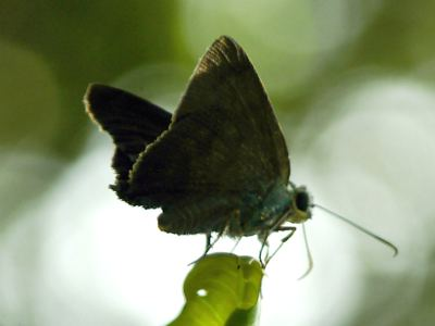 One of many butterflies